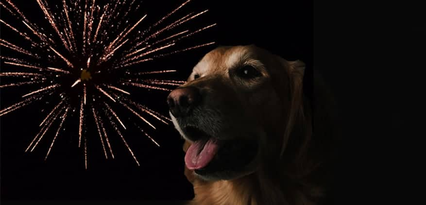 dog with open mouth and fireworks in the background