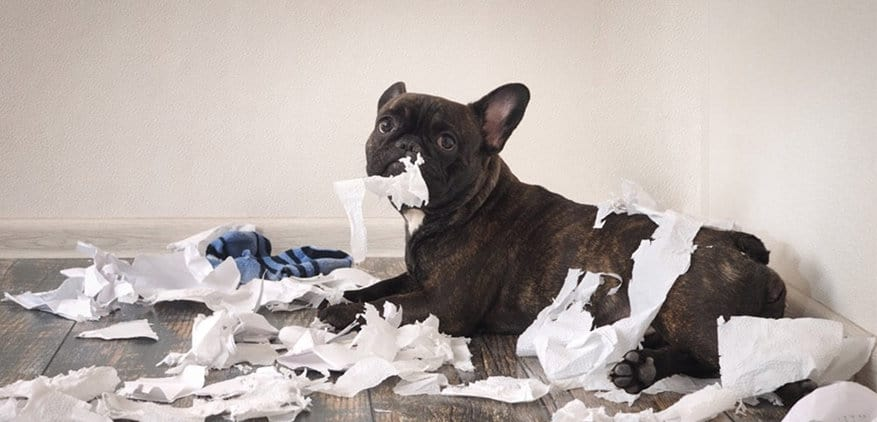 Pet owner needs a Dyson to clean up after a mess