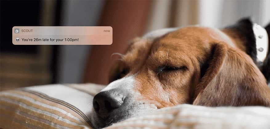 A beagle resting on a bed. Above his head, a late notification from the Scout for Pet Sitters app is shown.