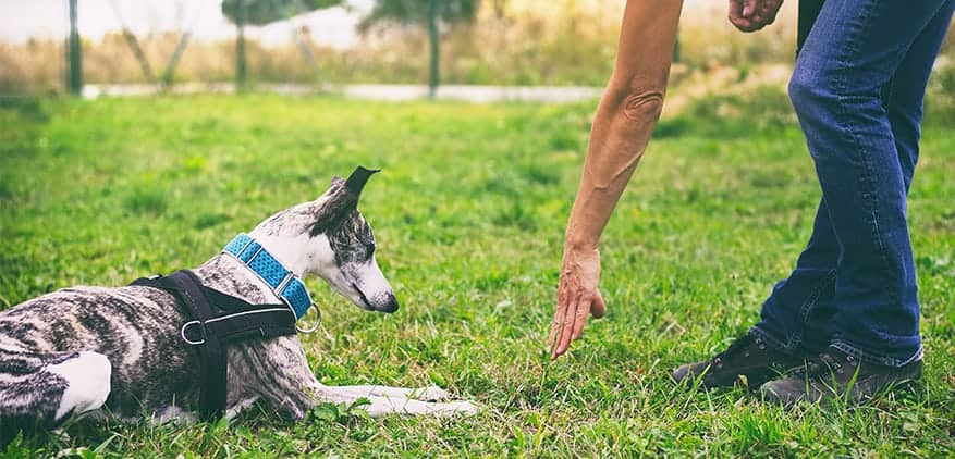 Hiring pet sitters and training them to work with pets.