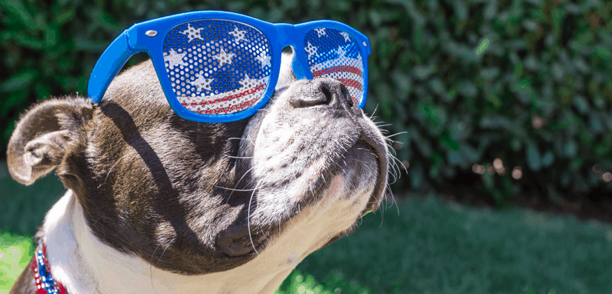 Dog in 4th of July Glasses