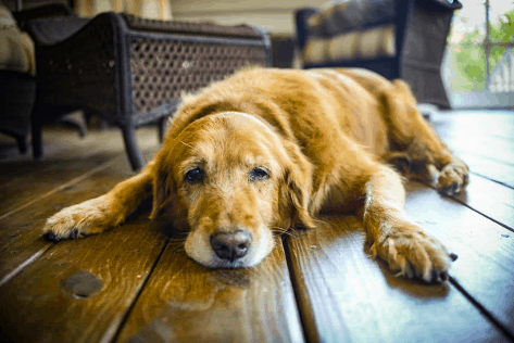 How to Modify Your Home for an Elderly Pet
