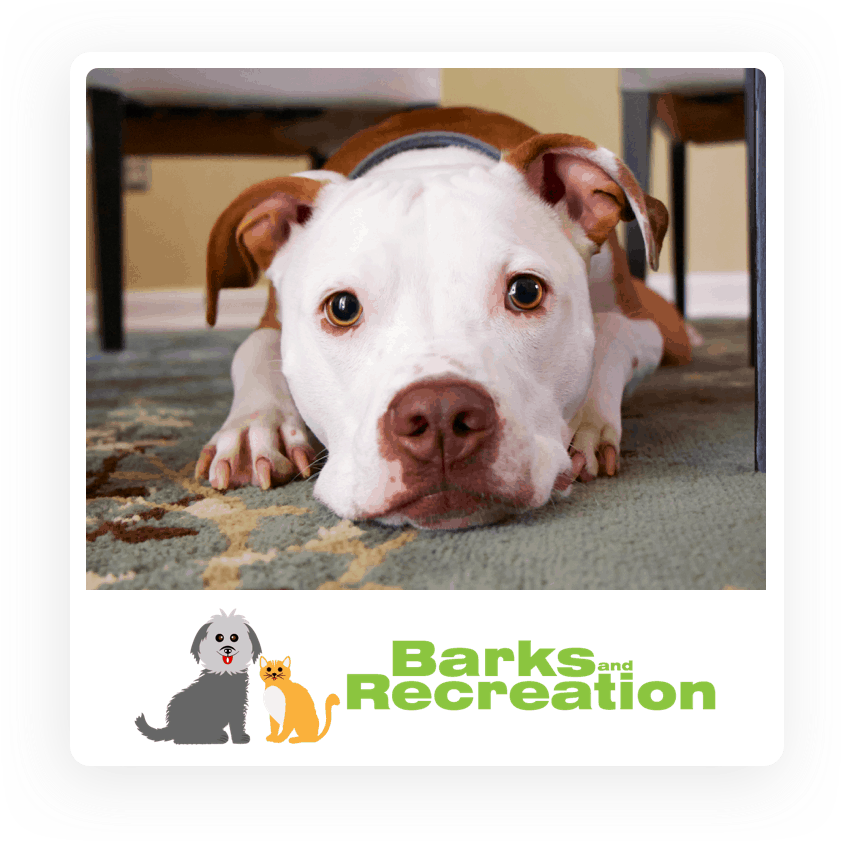 Dog Posing for Barks and Recreation - a Dog Walking Company