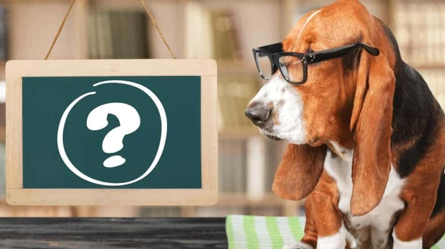 Dog in glasses wondering how much to charge for pet sitting services.