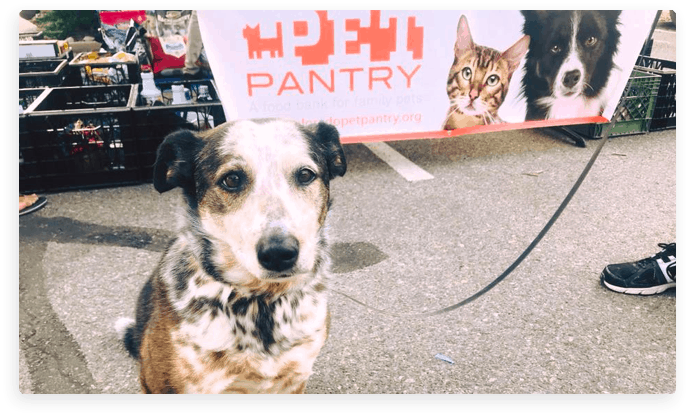 Dog standing in front of Colorado Pet Pantry banner