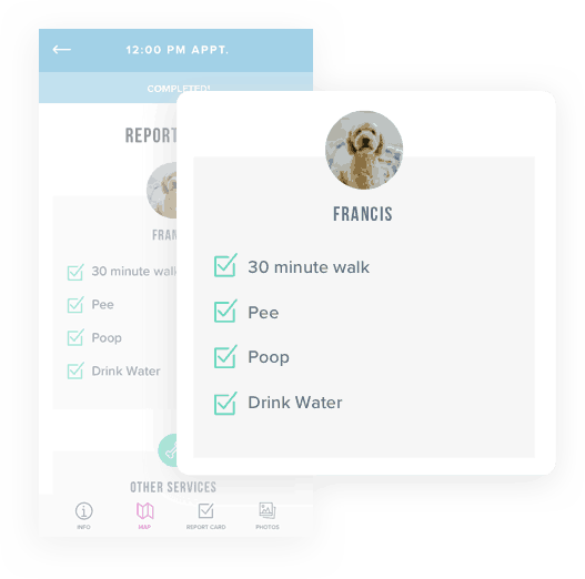 icon: dog walking report card from the Scout for Pet Owners app